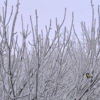 Холодно :: Михаил Махров