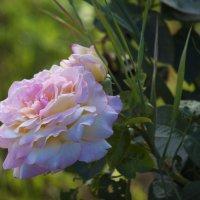 Цветы_015 :: Владимир Кроливец