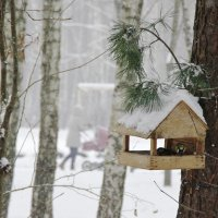 Пришла зима .... :: Vladymyr Nastevych