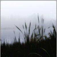 туман :: ник. петрович земцов