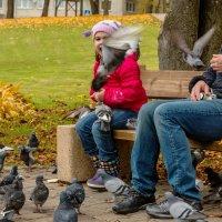 Нахальные голуби :: Владимир Самсонов