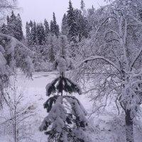 снег, зима :: Валерия Яскович