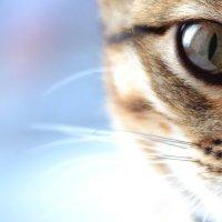ничего серьезного,мой кот) :: Ирина Горностаева