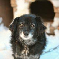 """еще одно фото из рублики : """"в гостях у папы"""",уж очень тронул меня этот пес. :: Ирина Горностаева"""