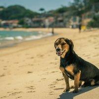 Собаки тоже любят пляжи :: Вадим Никитин