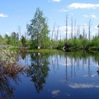Озеро :: Moose54 Лосев