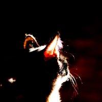 Мышка :: Анастасия Романова