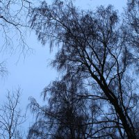 Когда деревья были большими... :: Екатерина К