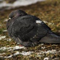 птица красивая :: Евгений Шестаков