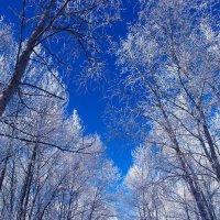 Зимняя сказка в парке :: Дмитирй