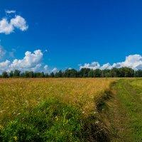 В поле :: Сергей Долганов