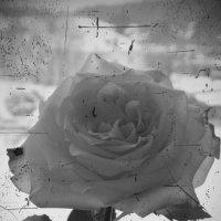 Роза :: Ксения Терещук