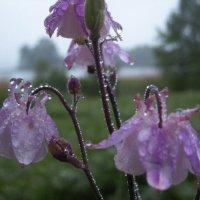 первый дождь лета :: liudmila drake