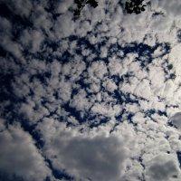 белогривые облака :: Ксения Грибанова