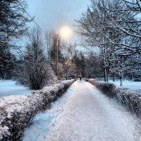 Зимняя аллея :: Эльза Королёва