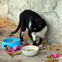 Уличные кошки :: Anastasia Schegoleva