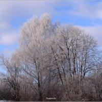 Прекрасный, морозный день.. :: Антонина Гугаева