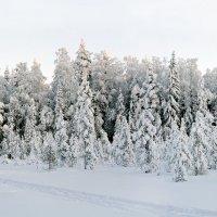 Зимушка-зима. :: Николай Тренин