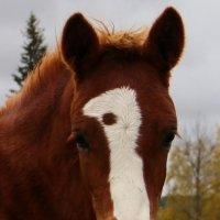 лошадушка :: Александр