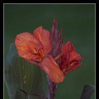 Цветок :: Gene Brumer