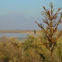 техно-дерево :: Андрей Козлов