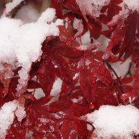 Зимы прошлых лет_3 :: Яков Геллер