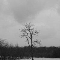 дерево :: Сергей Федин