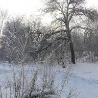 зима :: Anna Gridshina