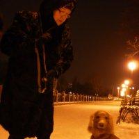 Зимний спаниэль :: Наталья Тимошенко