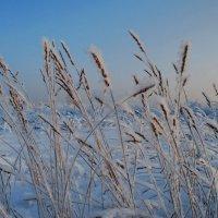 Одетые в снежок... :: Татьяна Аистова