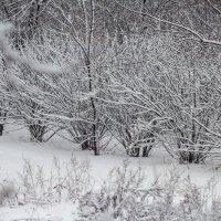 Зима :: Василий Игумнов