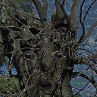 Живые деревья :: Вера Бережная