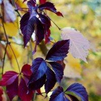 Осень чудит :: Владимир Кроливец