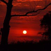 закат солнца в Пицунде. :: Лариса Красноперова