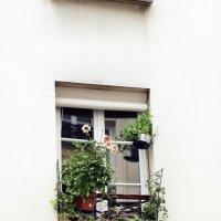 Парижские окна # 4 :: Михаил Малец