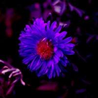 голубые люди розовой Земли - 2 :: Юрий Гайворонский