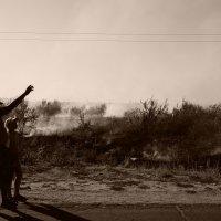 Пожар в оливковой роще :: Дмитрий Лущай