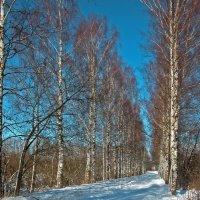 Весна света :: Наталья Лунева