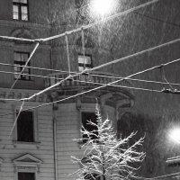 первый снег :: Galina Solonova