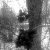 ягоды :: Юлия Закопайло
