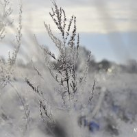 Зима :: N. Efimkina