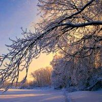 Распушились деревья инеем, будто снова покрылись листвой... :: Евгений Юрков