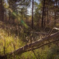 Осень :: Лукман Нуриахметов