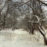 Зимний сад. :: Лариника Кузьменко