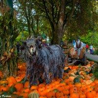 Halloween :: Georg Förderer