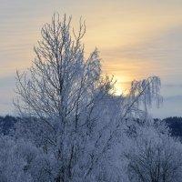 зима в раздумье :: shperl