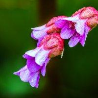 Цветок :: Nn semonov_nn