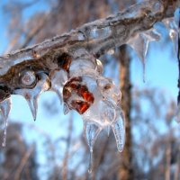 Ледяной дождь :: Алексей Сараев