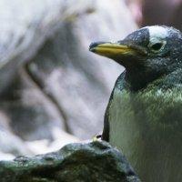 Пингвинарий :: saratin sergey