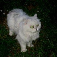 Ночная охотница :: Сергей Вилков